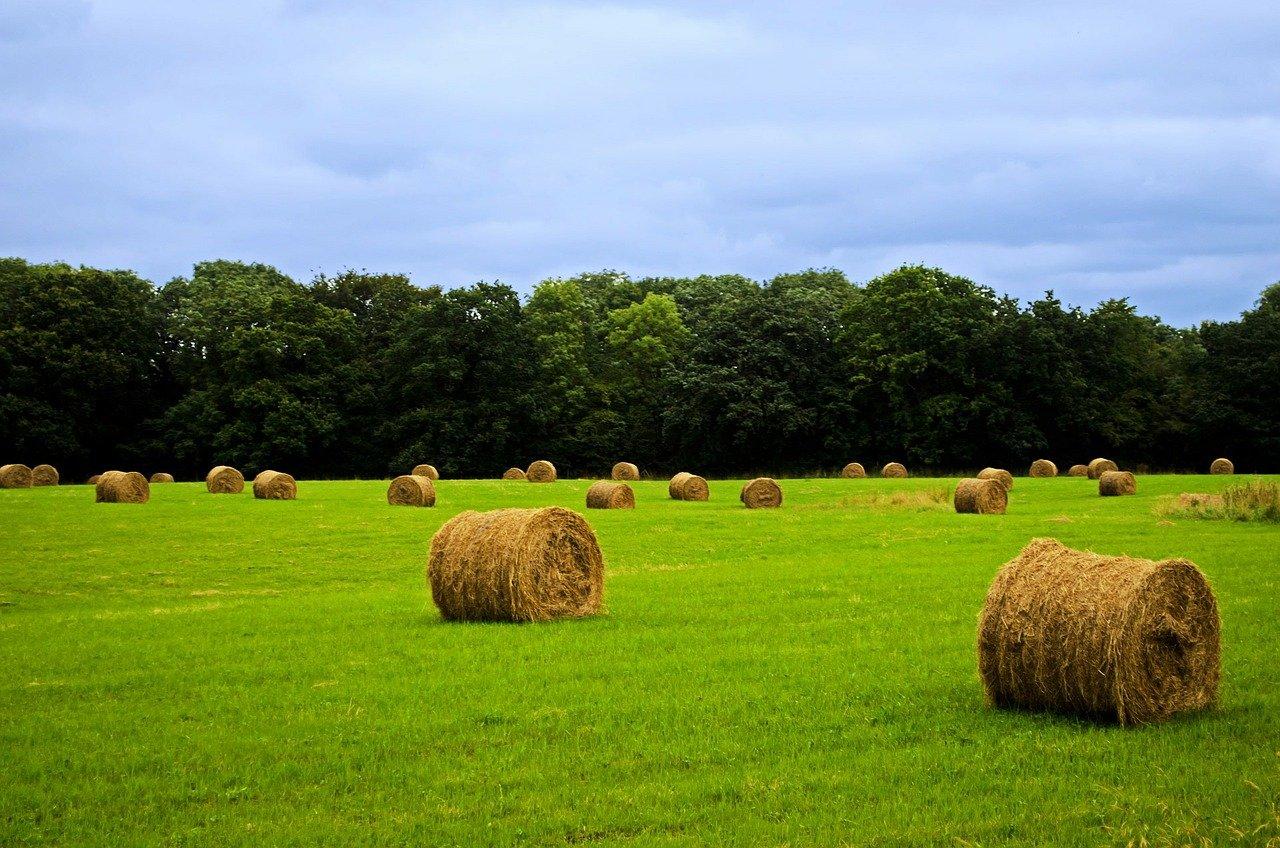 In vendita ottomila ettari della Banca delle terre