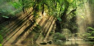 Planet Impact, il progetto sostenibile per salvare il pianeta e guadagnare