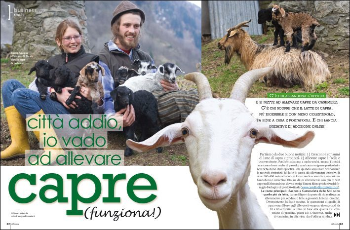 business plan allevamento capre da latte